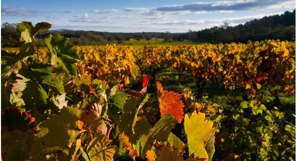 Velkopavlovická vinařská podoblast