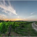 10 nejlepších vinařských destinací v Evropě