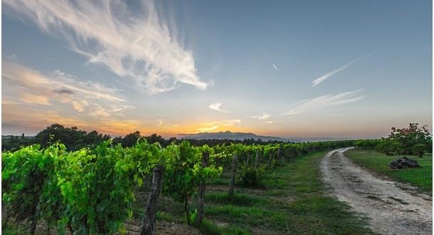 10 nejlepších vinařských destinací v Evropě: I. díl