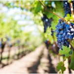 vinařské destinace v Evropě
