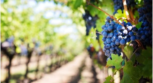 10 nejlepších vinařských destinací v Evropě – II. Díl
