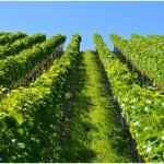 chuť vašeho oblíbeného vína