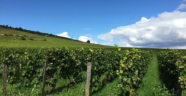 Hlavní vinařské oblasti Francie – II. díl