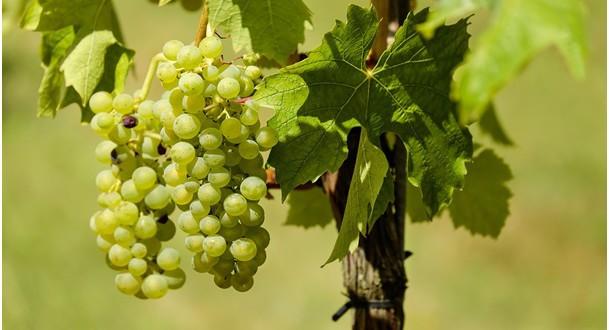 Hlavní vinařské regiony Francie – III. díl