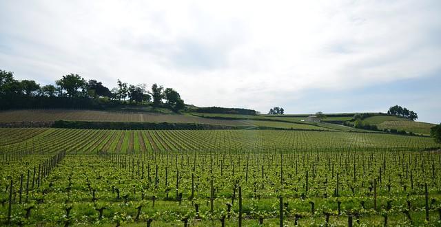 Hlavní vinařské regiony Francie – I. díl
