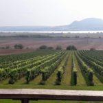 Návštěva ve vinařství Sonberk