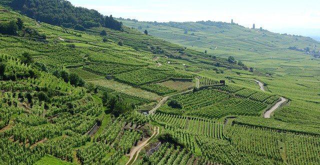 Vinařské regiony Francie