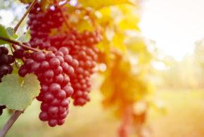 Vinařské oblasti Portugalska