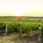 Vinařský ráj
